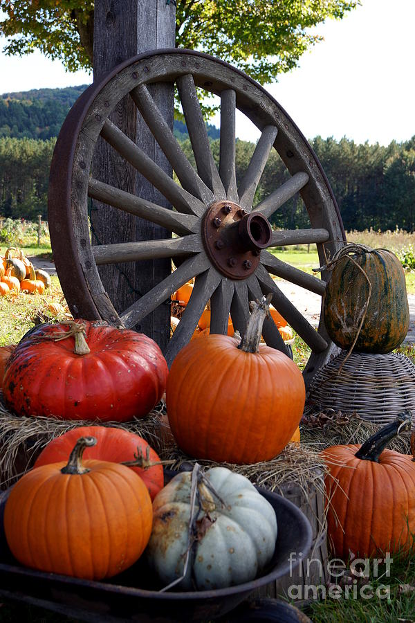 Pumpkin Wheel Photograph  - Pumpkin Wheel Fine Art Print