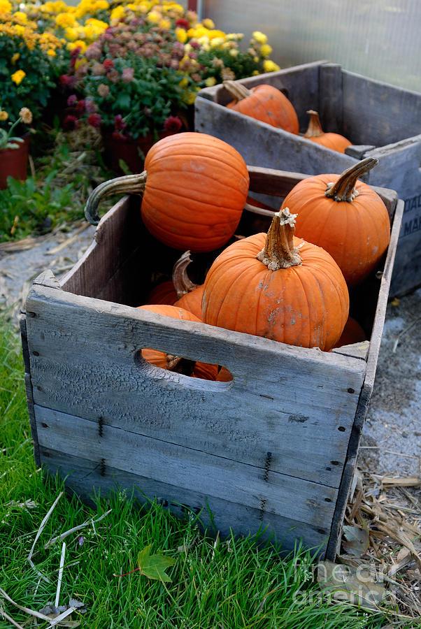 Pumpkins In Wooden Crates Photograph