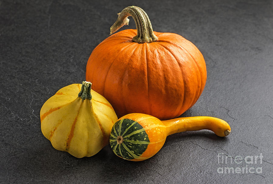 Pumpkins On A Slate Plate Photograph  - Pumpkins On A Slate Plate Fine Art Print
