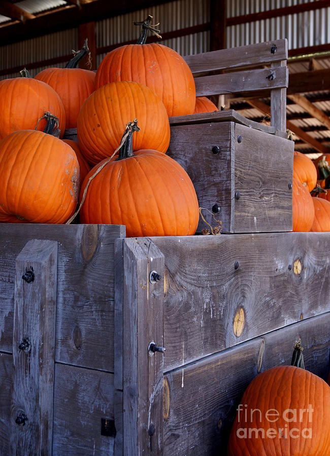 Pumpkins On The Wagon Photograph