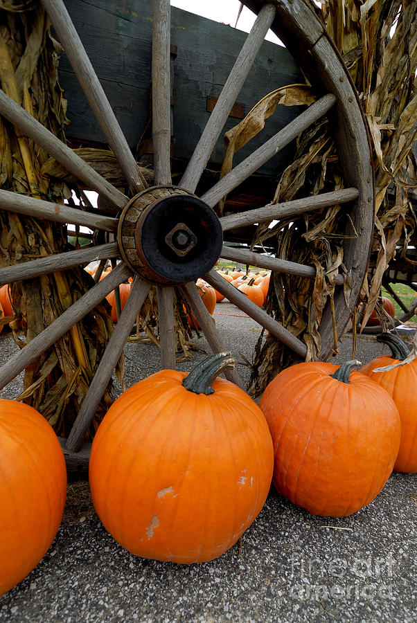 Pumpkins With Old Wagon Photograph