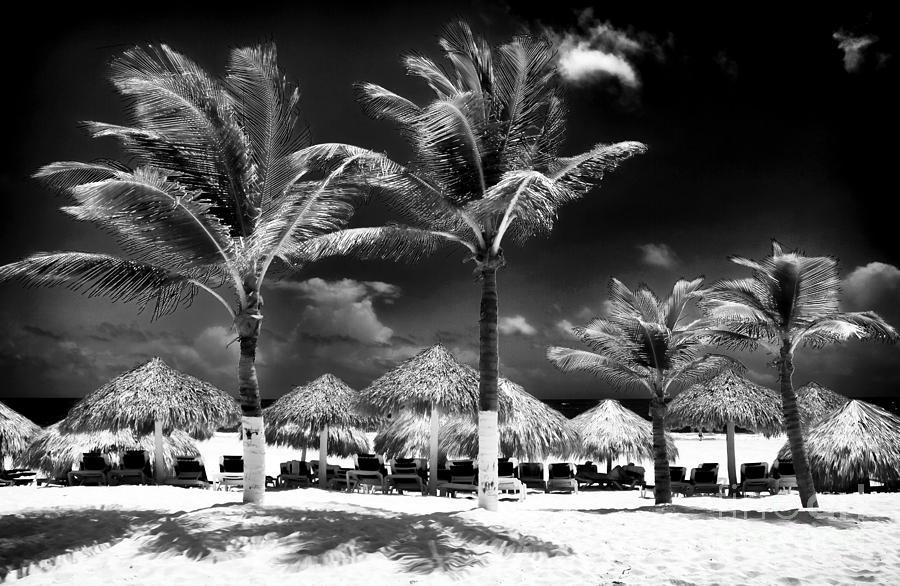 Punta Palms Photograph - Punta Palms by John Rizzuto