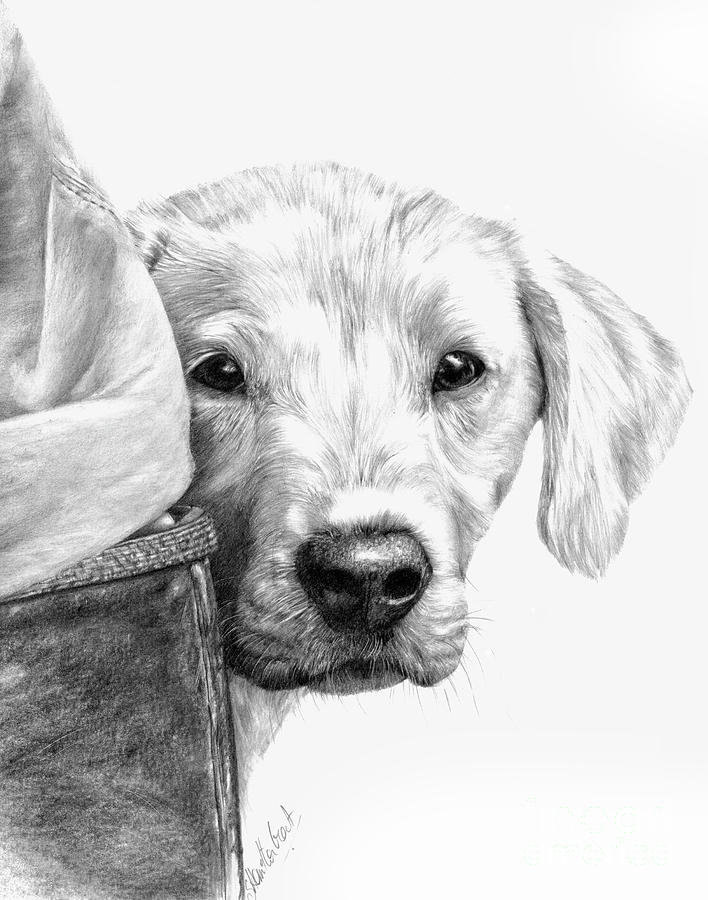 Dog Drawing - Puppies And Wellies by Sheona Hamilton-Grant