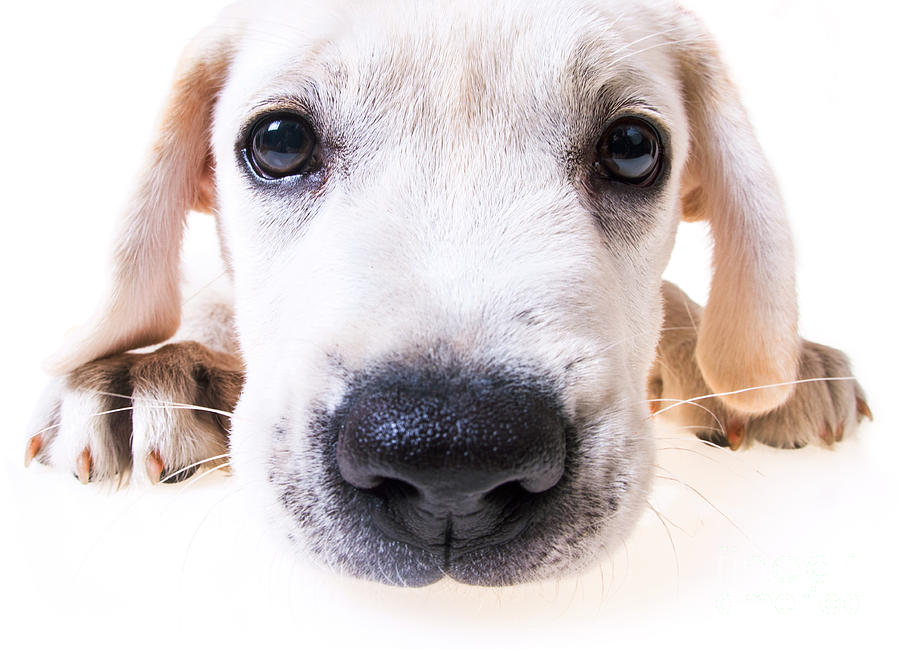 Puppy Face Photograph  - Puppy Face Fine Art Print