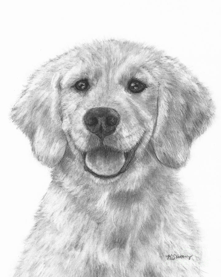 Puppy Golden Retriever Drawing by Kate Sumners