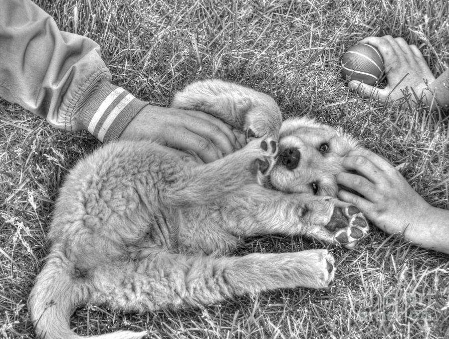 Puppy Love Photograph  - Puppy Love Fine Art Print