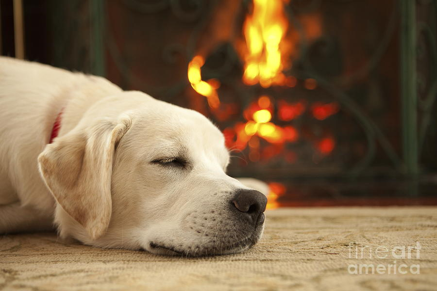 Puppy Sleeping By The Fireplace Photograph