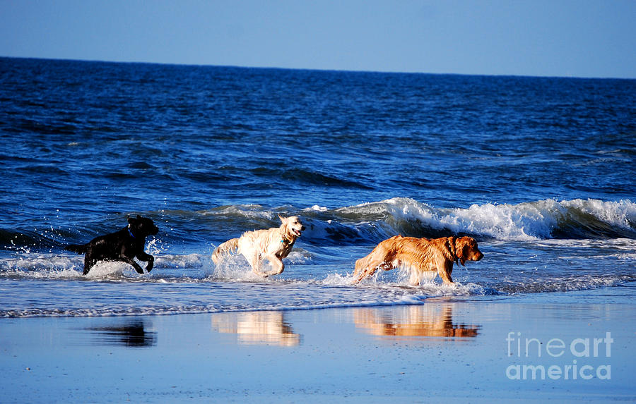 Dogs Photograph - Pups On The Beach by Linda Mesibov