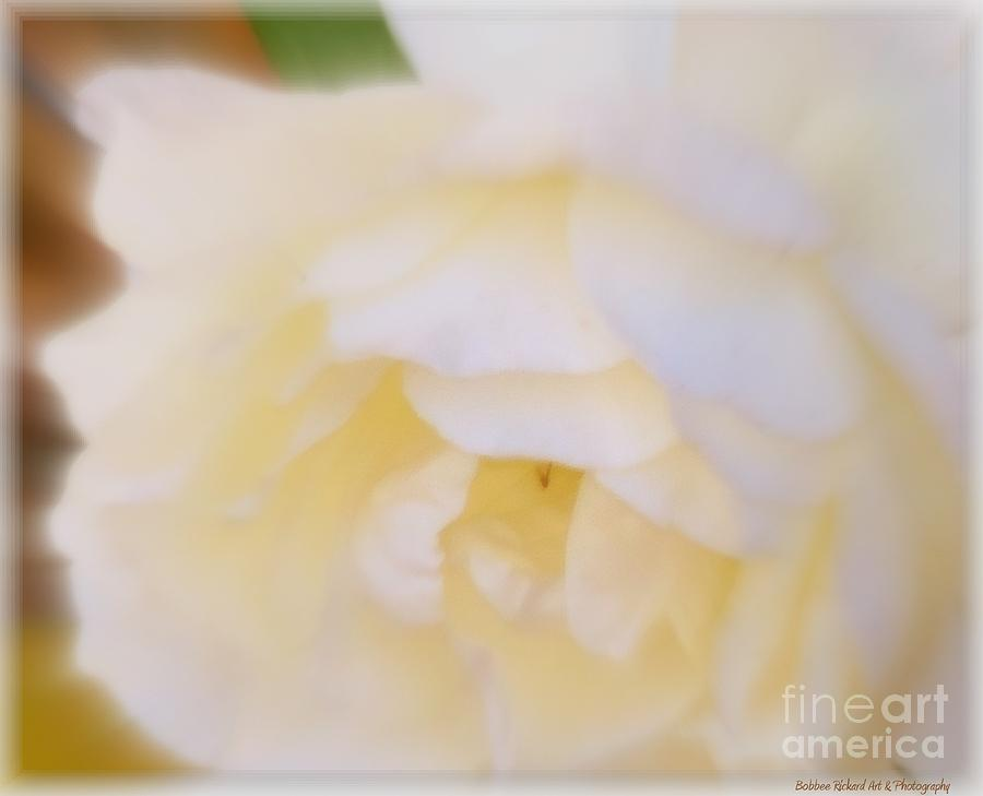 Purity  Photograph  - Purity  Fine Art Print