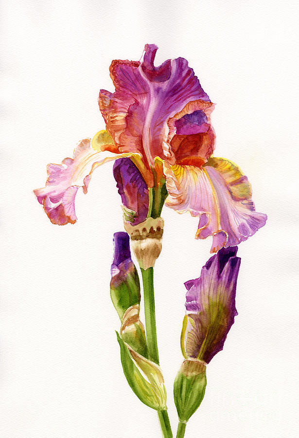 Purple And Orange Iris Painting  - Purple And Orange Iris Fine Art Print