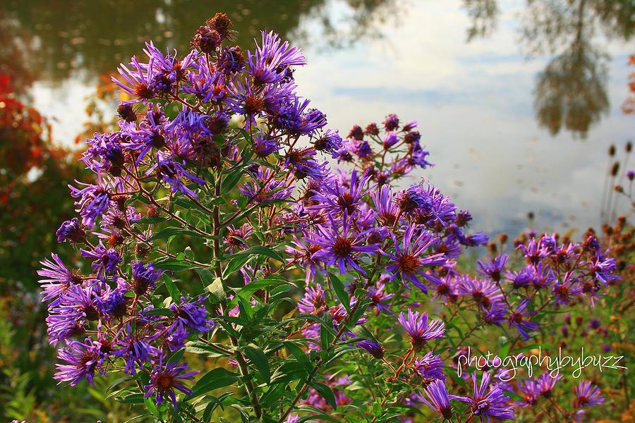 purple autumn flower by rick buzalewski