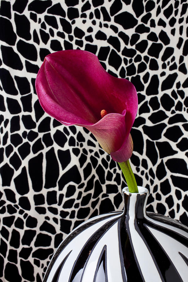 Purple Calla Lily Photograph - Purple Calla Lily by Garry Gay