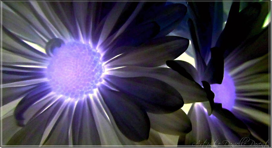 Purple Daisies Negative Effects Photograph