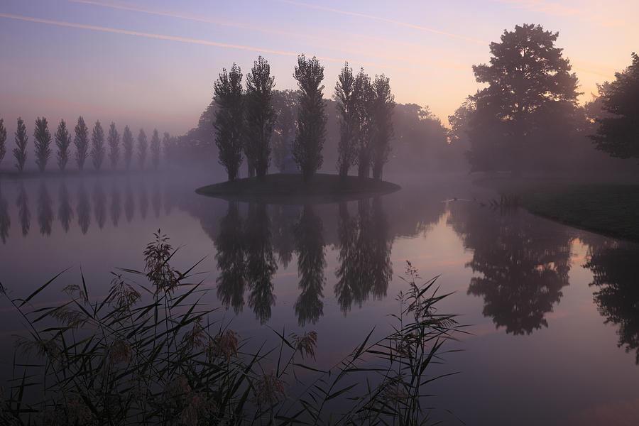 Purple Dream Photograph