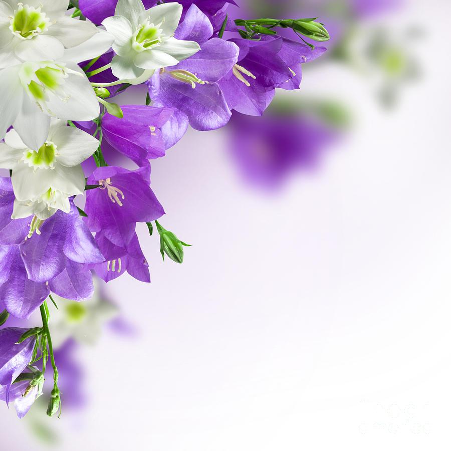 Purple Flower Frames Photograph