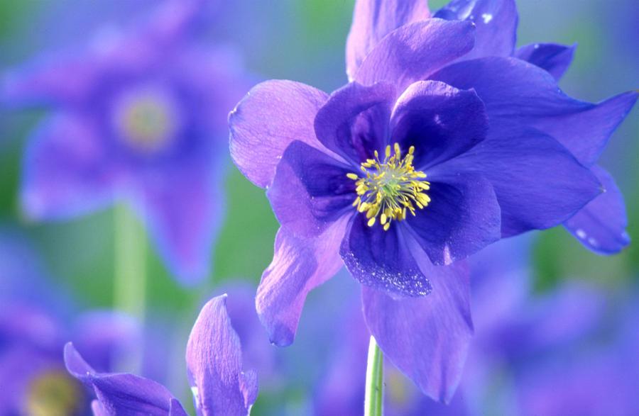 Purple Flowers Photograph
