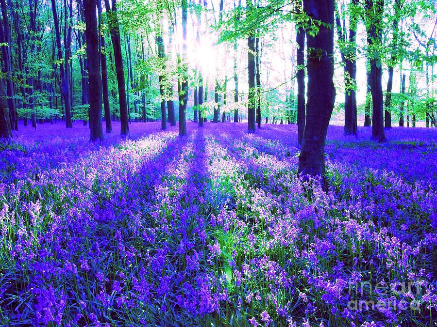 Purple Forest Flower Carpet Digital Art By Maureen Tillman