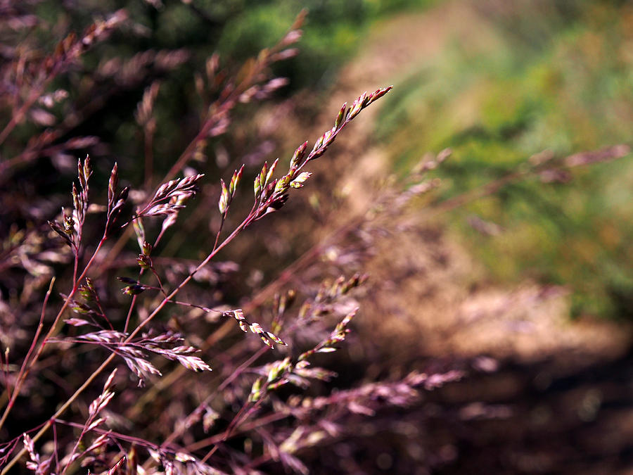 Purple Grass Photograph  - Purple Grass Fine Art Print