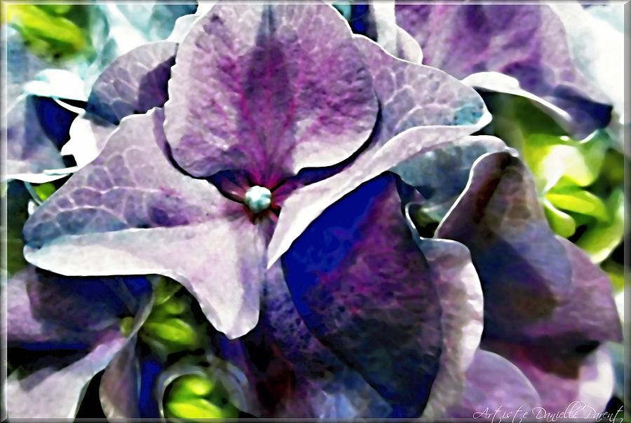 Purple Hydrangea  Flower Photograph  - Purple Hydrangea  Flower Fine Art Print