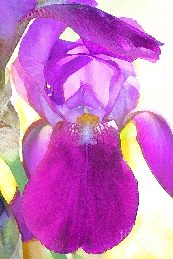 Purple Iris Watercolor Photograph  - Purple Iris Watercolor Fine Art Print