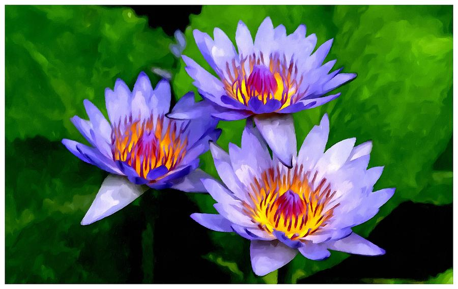 purple lotus flower painting, Natural flower