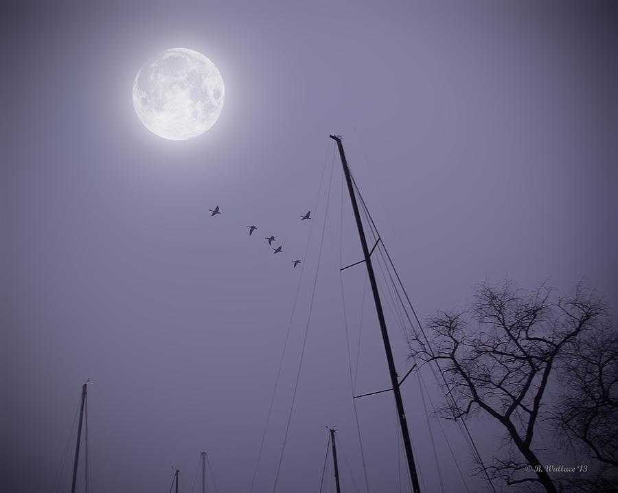 Purple Night Photograph
