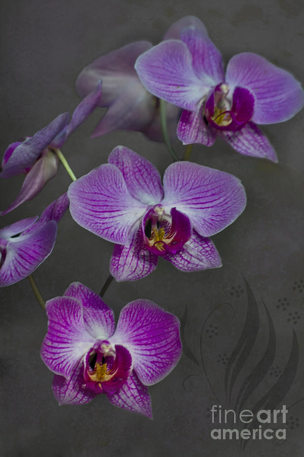 Purple Orchid Flower Photograph  - Purple Orchid Flower Fine Art Print