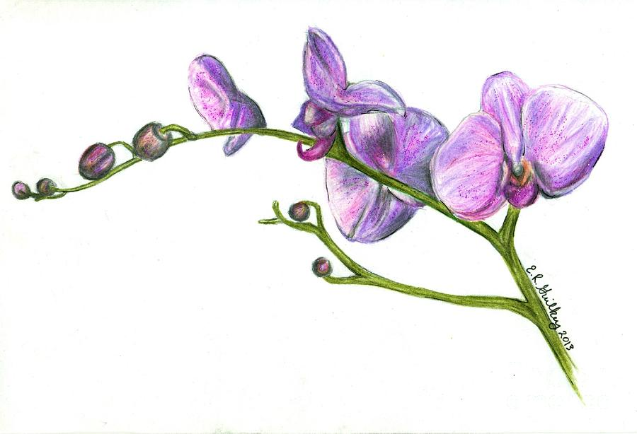 Purple Orchid Drawing Purple orchids drawing: imgarcade.com/1/purple-orchid-drawing