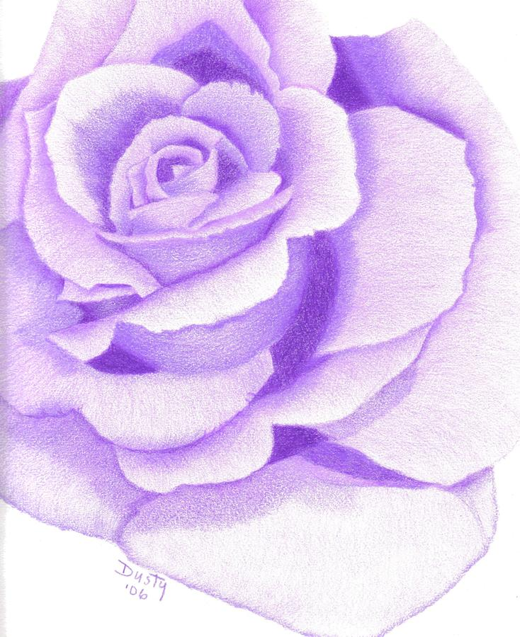 purple passion rose drawing by dusty reed