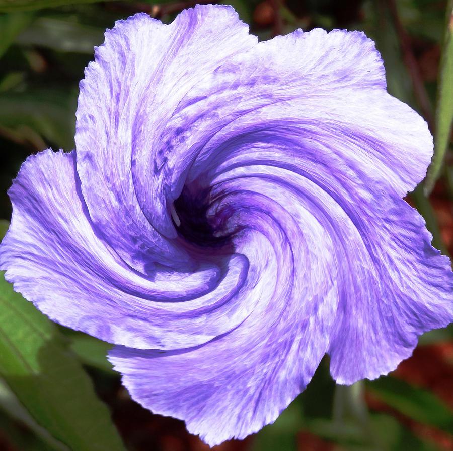Purple Petunia Twirl Photograph by Belinda Lee