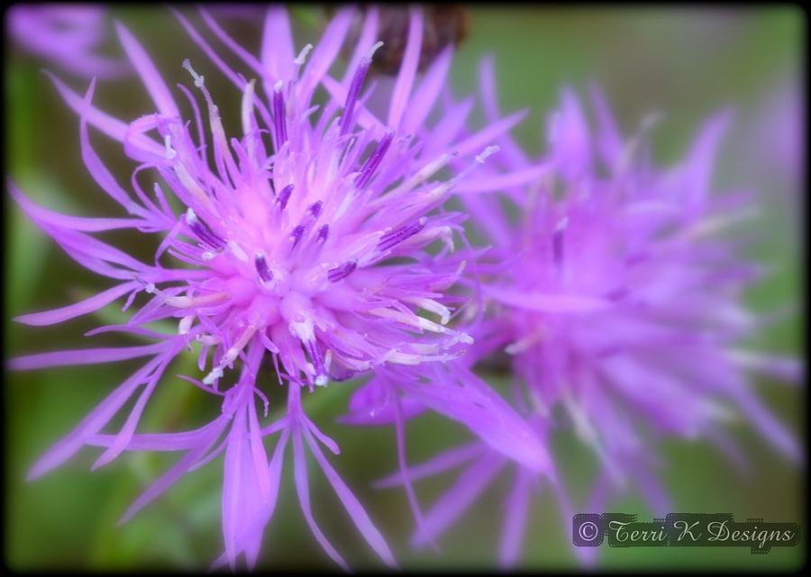 Purple Photograph - Purple Point by Terri K Designs