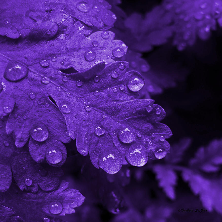 Purple Rain Photos Prince Pictures Picture