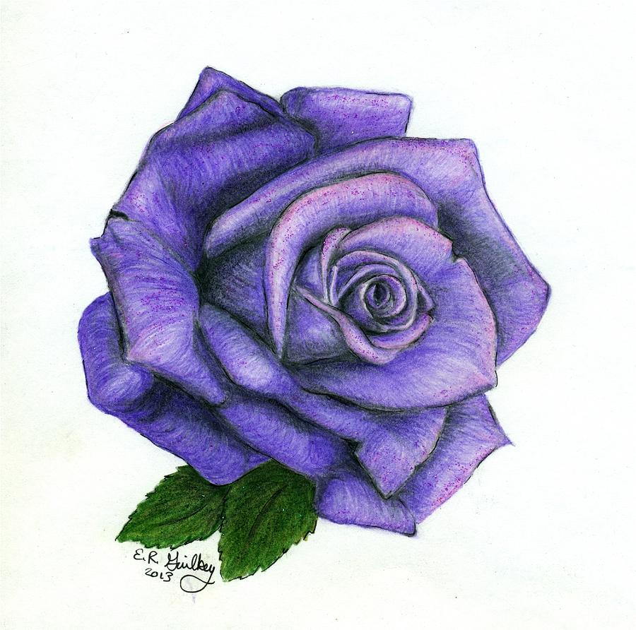 purple rose drawing by elizabeth guilkey