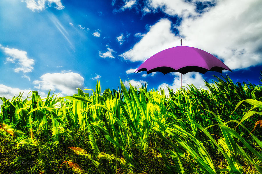 Umbrella Photograph - Purple Umbrella In A Field Of Corn by Bob Orsillo