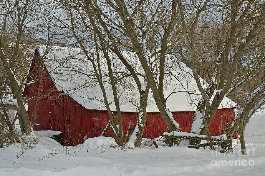 Quebec Winter Photograph  - Quebec Winter Fine Art Print