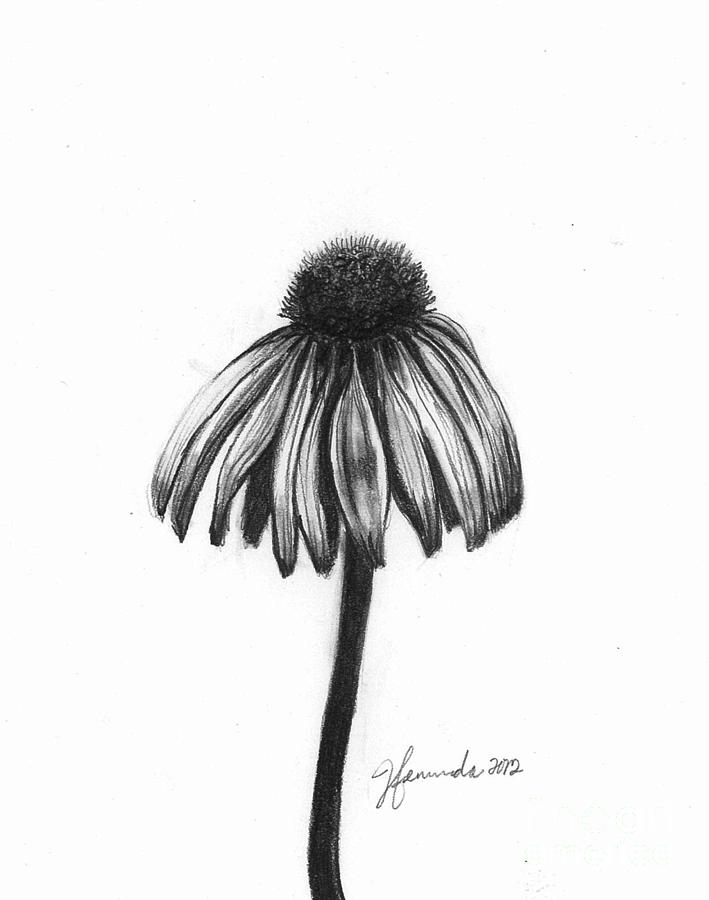 Quiet Comfort Drawing  - Quiet Comfort Fine Art Print