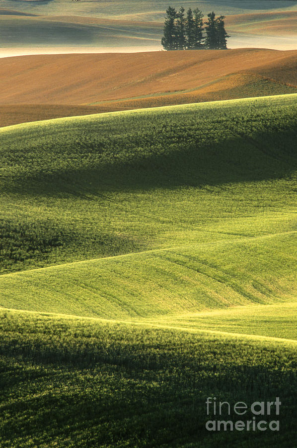 Quiet Morning In The Palouse  Photograph