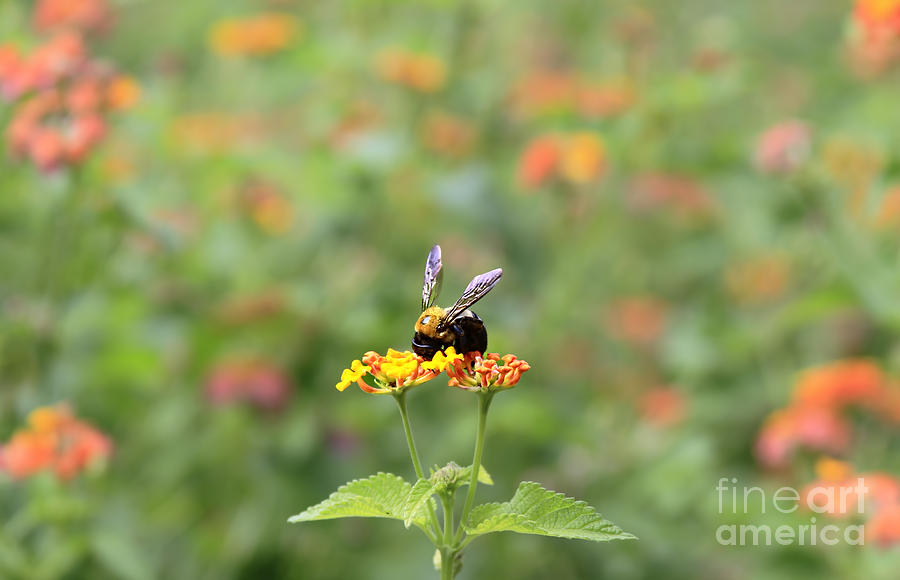 Lantana Photograph - Quiet Time by Geraldine DeBoer