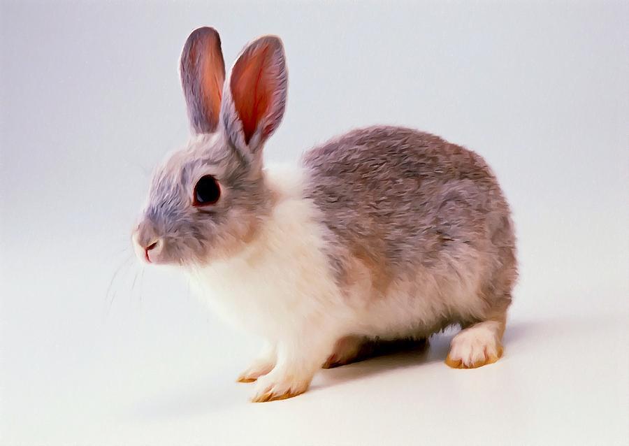 Rabbit 2 Painting