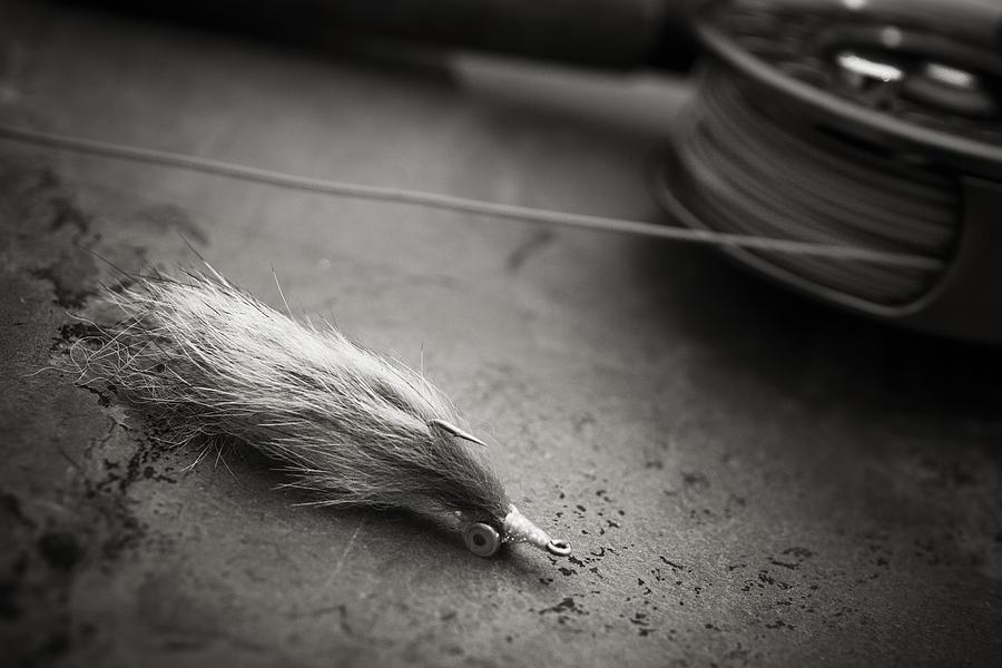Rabbit Strip Fly Photograph