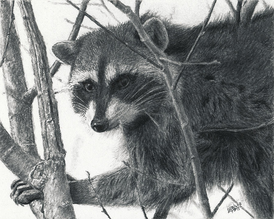 Raccoon - Charcoal Experiment Drawing  - Raccoon - Charcoal Experiment Fine Art Print