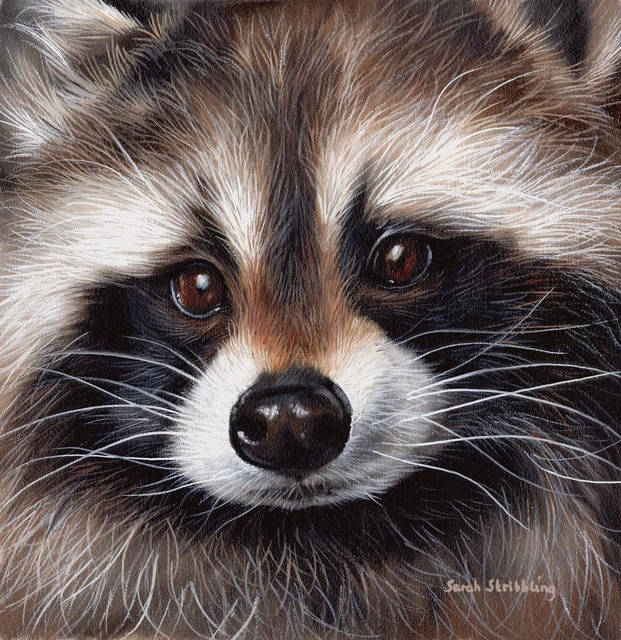 Raccoon Painting by Sarah Stribbling Raccoon Painting