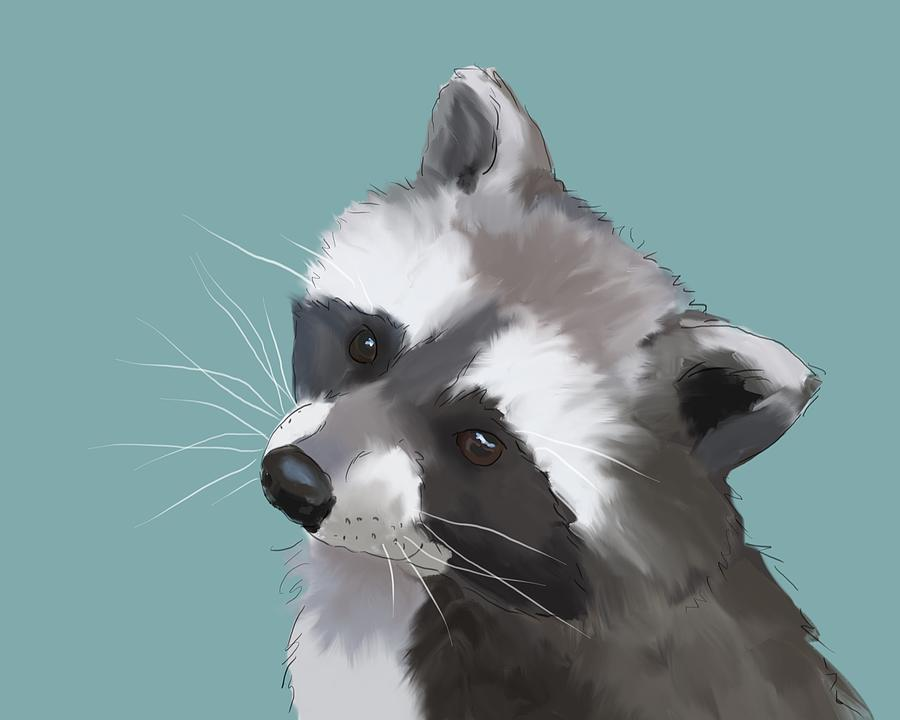 Raccoon Whiskers Painting  Raccoon Art