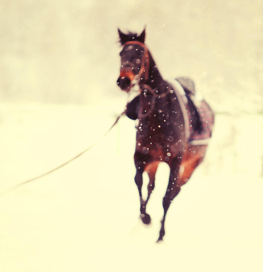 Race In The Snow Photograph  - Race In The Snow Fine Art Print