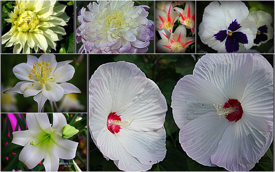 Radiant In White - Collage Of White Blossoms - White Flowers - Nature Photograph - Radiant In White by Dora Sofia Caputo Photographic Art and Design
