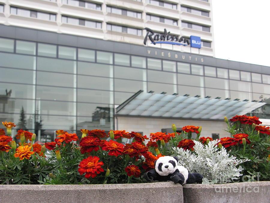 Radisson Blu Lietuva. Baby Panda Likes It Photograph