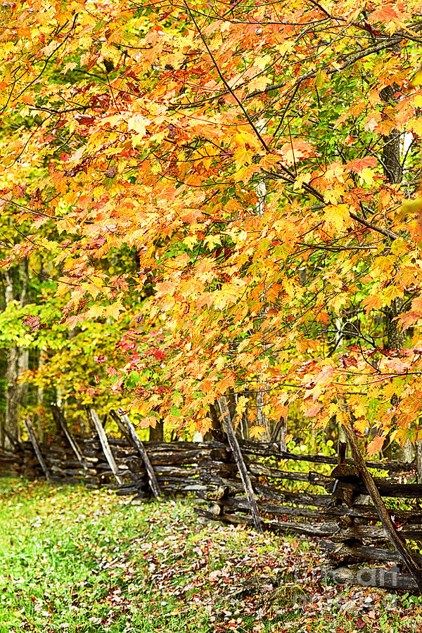Rail Fence Fall Color Photograph