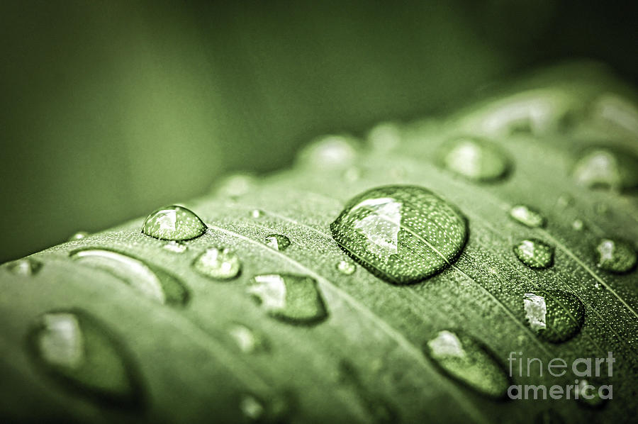 Rain Drops On Green Leaf Photograph