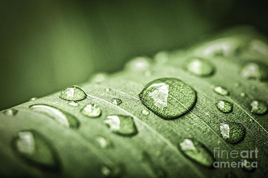 Plant Photograph - Rain Drops On Green Leaf by Elena Elisseeva