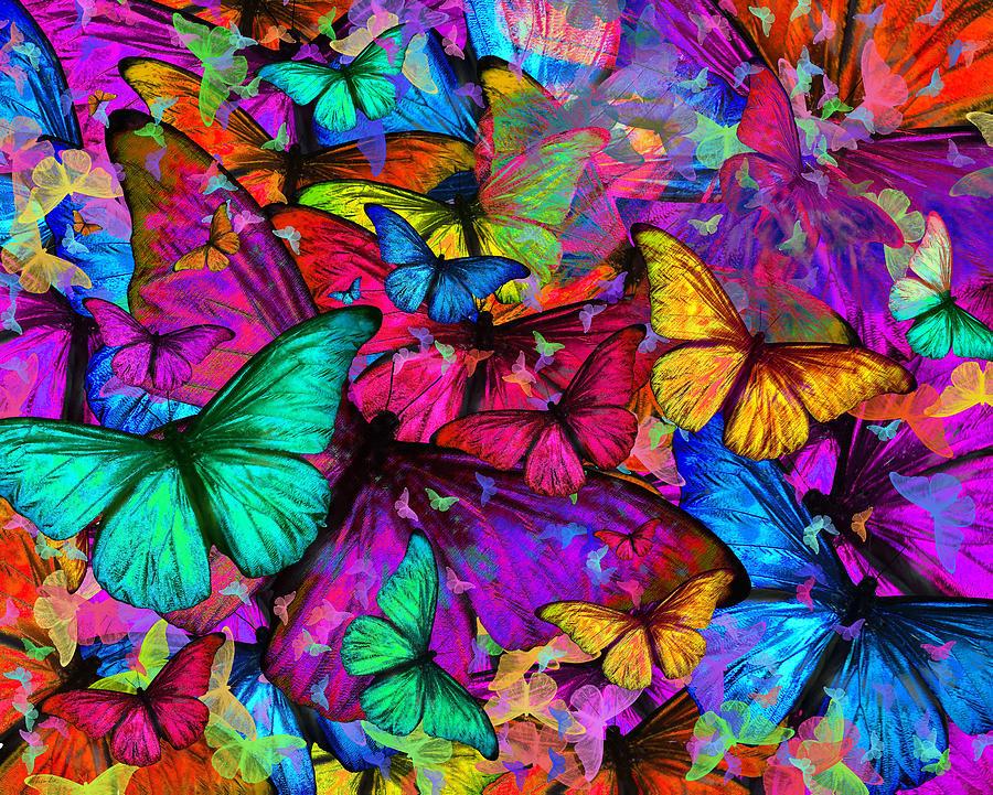 hd rainbow butterfly wallpaper - photo #25